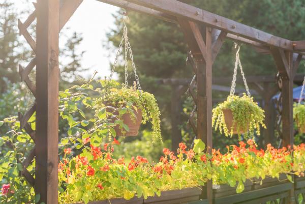 Blumenampeln und Abendsonne