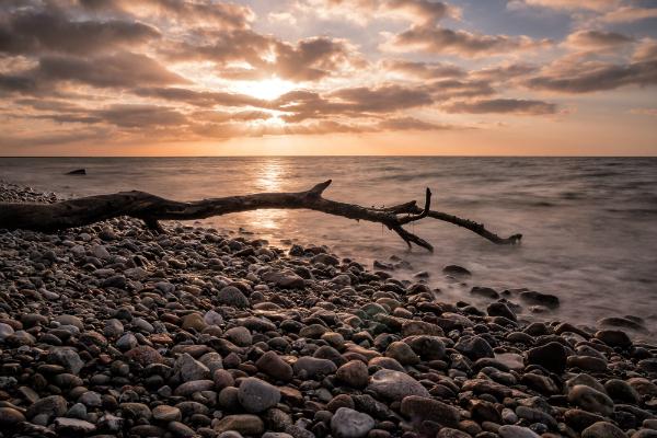 Treibholz an der Küste der Ostsee