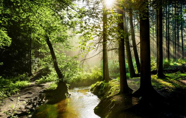 Der Wald muss unversehrt bleiben