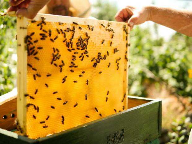 Bienen bei der Produktion