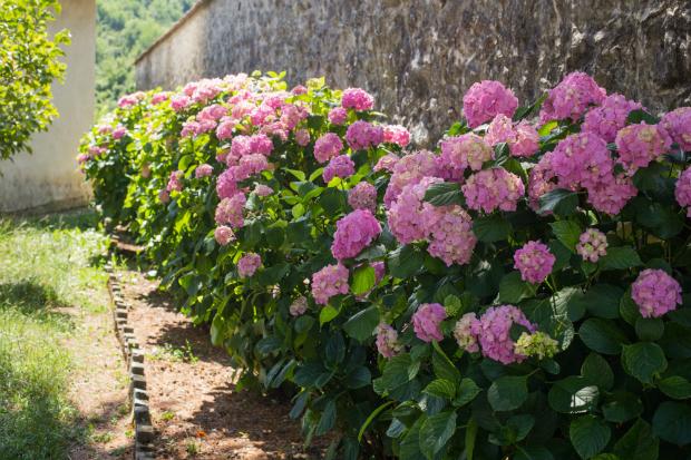 Blumen, Sträucher und Bäume machen den Landhausgarten lebendig