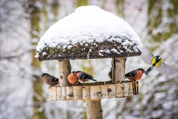 Voegel am Vogelhaus