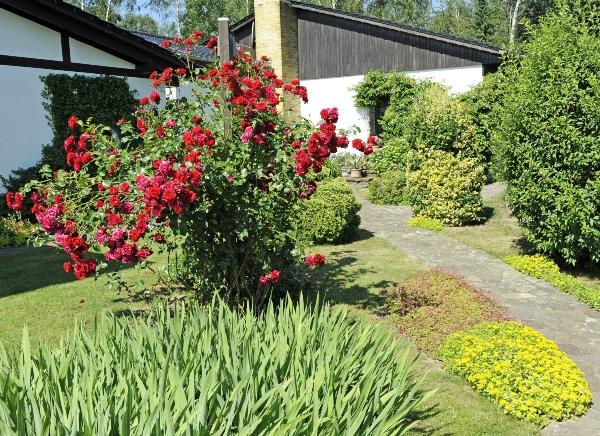 landhausgarten-rosen-garten-im-landhausstil